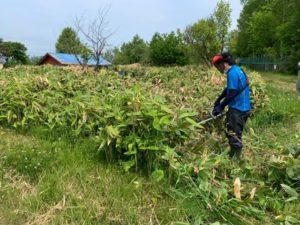 刈り払い機 草刈り作業